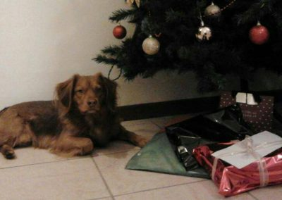 Cani adottati ATAR Brescia