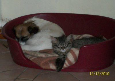 Luna e Romeo