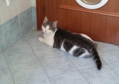 Gatti adottati ATAR Brescia