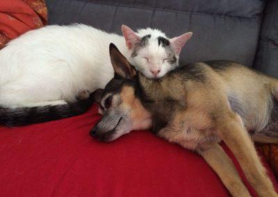Acciuga (Gatto ex ATAR) e Cricket (Cagnolina ex ATAR)