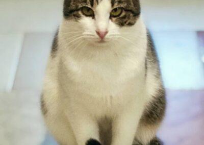 Gatti in adozione ATAR Brescia