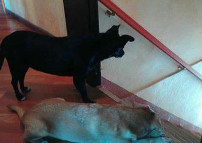 Cani e gatti in cerca di casa a Brescia