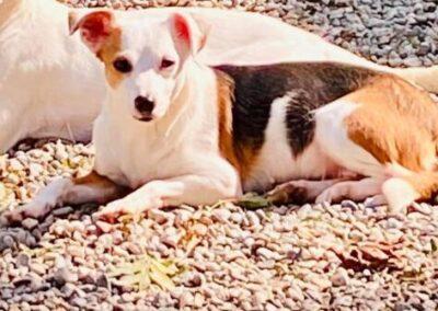 Cani in adozione ATAR Brescia